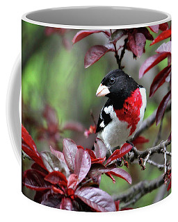 Rose-breasted Grosbeak Coffee Mug