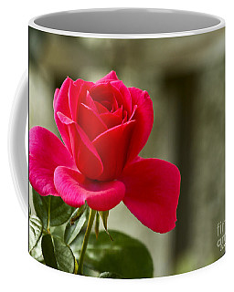 Red Rose Wall Art Print Coffee Mug by Carol F Austin