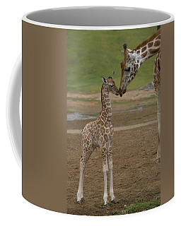 Rothschild Giraffe Giraffa Coffee Mug