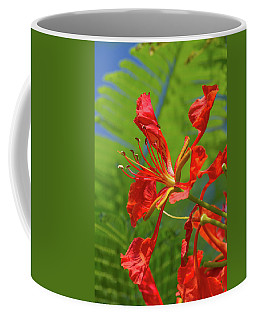 Royal Poinciana Flower Coffee Mug