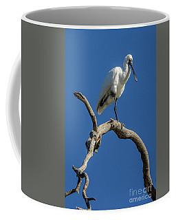 Royal Spoonbill 01 Coffee Mug