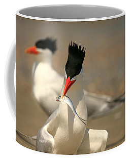 Royal Tern Catch Coffee Mug