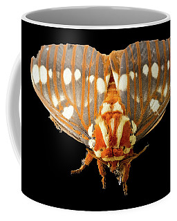 Royal Walnut Moth On Black Coffee Mug