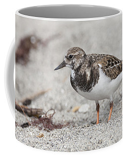 Ruddy Turnstone On The Beach Coffee Mug