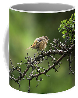 Ruffled Feathers Coffee Mug