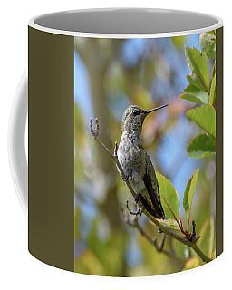 Rufous Hummingbird Coffee Mug by Keith Boone
