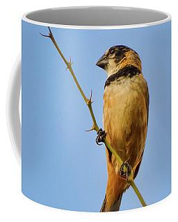 Rusty-collared Seedeater Coffee Mug