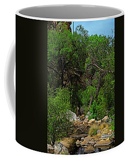 Coffee Mug featuring the photograph Sabino Canyon V49 by Mark Myhaver