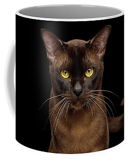 Sable Burmese Cat Coffee Mug