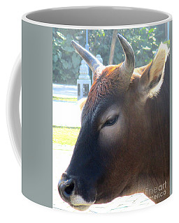Coffee Mug featuring the photograph Sacred Cow 4 by Randall Weidner