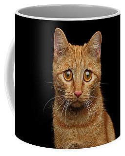 Coffee Mug featuring the photograph Sad Ginger Cat  by Sergey Taran