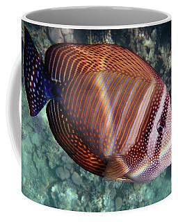 Sailfin Tang Makadi Bay Coffee Mug
