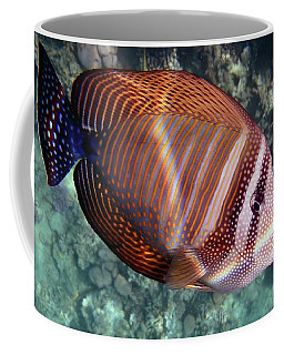 Sailfin Tang Makadi Bay Coffee Mug