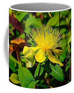 Saint John's Wort Blossom Coffee Mug