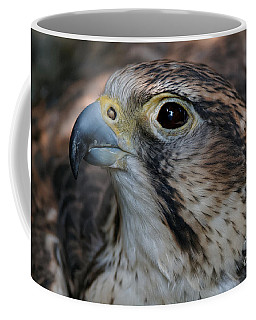 Saker Falcon Portrait Coffee Mug
