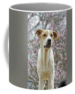 Sam In Spring Coffee Mug