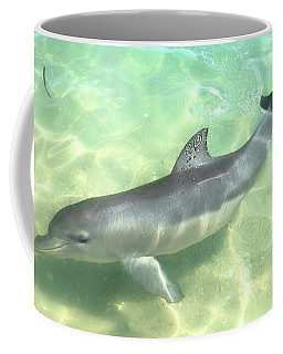 Samu 1 , Monkey Mia, Shark Bay Coffee Mug by Dave Catley