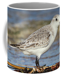 Sanderling Westhampton New York Coffee Mug