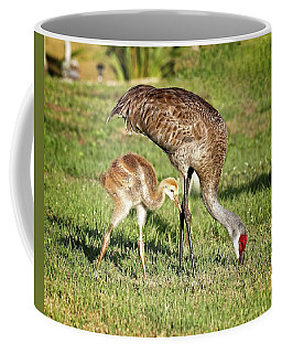 Sandhill Crane And Colt Coffee Mug