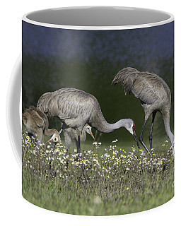 Coffee Mug featuring the photograph Sandhill Crane Family by Jeannette Hunt