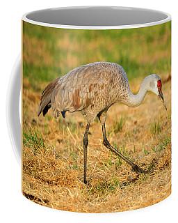 Sandhill Crane Grazing Coffee Mug