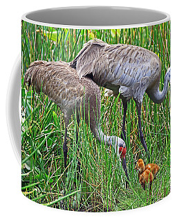 Sandhill Cranes  Newborns Coffee Mug by Larry Nieland