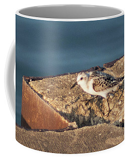 Coffee Mug featuring the photograph Sandpiper Scouting The Pier by Sally Sperry