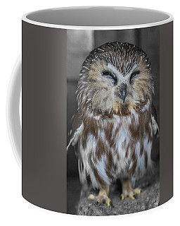 Saw Whet Owl Coffee Mug