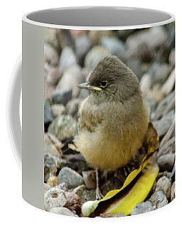 Say's Phoebe Fledgling Coffee Mug