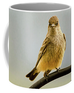 Say's Phoebe Ranch Bird Coffee Mug