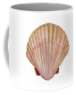 Scallop Shell Coffee Mug
