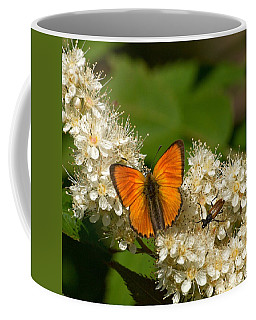 Coffee Mug featuring the photograph Scarce Copper 2 by Jouko Lehto