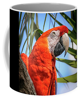 Coffee Mug featuring the photograph Scarlet Macaw by Steven Sparks