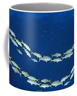 School Of Fish Great Barrier Reef Coffee Mug