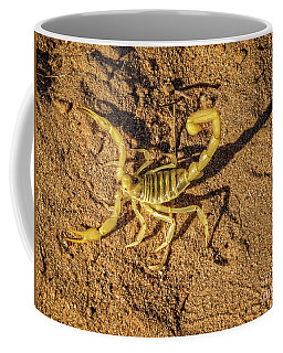 Coffee Mug featuring the photograph Scorpion by Robert Bales