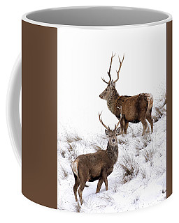 Coffee Mug featuring the photograph Scottish Red Deer Stags by Grant Glendinning