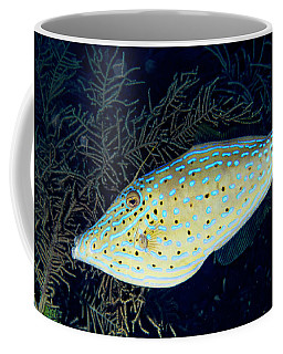 Coffee Mug featuring the photograph Scrawled Filefish by Jean Noren