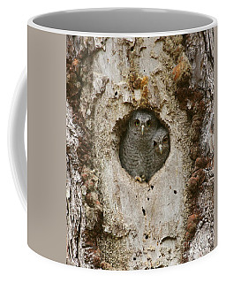 Screech Owl Babies Peeking Out Coffee Mug