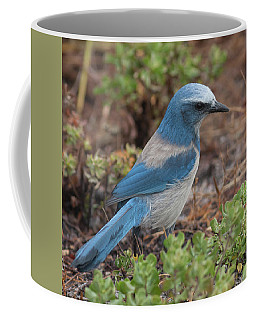 Scrub Jay Framed In Green Coffee Mug