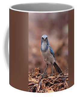 Scrub Jay On Chop Coffee Mug