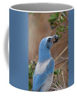 Scrub Jay With Acorn Coffee Mug