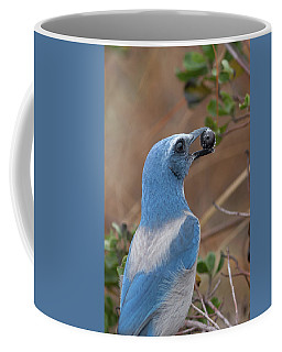 Scrub Jay With Acorn Coffee Mug