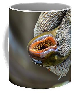 Sea Lamprey Coffee Mug