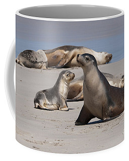 Coffee Mug featuring the photograph Sea Lions by Werner Padarin