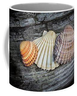 Sea Shells On Wood Coffee Mug