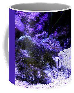 Sea Spider Coffee Mug