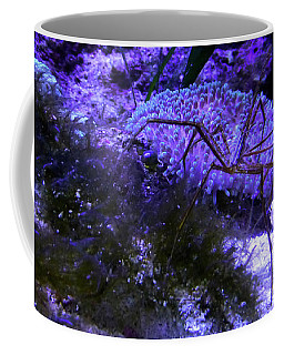 Coffee Mug featuring the photograph Sea Spider by Francesca Mackenney