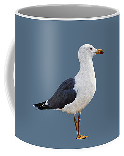 Coffee Mug featuring the photograph Seagull Portrait by Sue Melvin