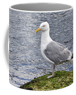 Seagull Posing Coffee Mug by Glenn Gordon