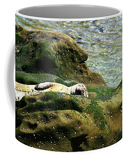 Coffee Mug featuring the photograph Seal On The Rocks by Anthony Jones